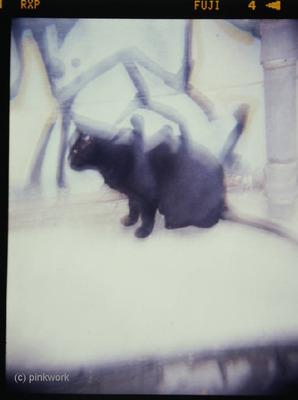 holga_blackcat_2